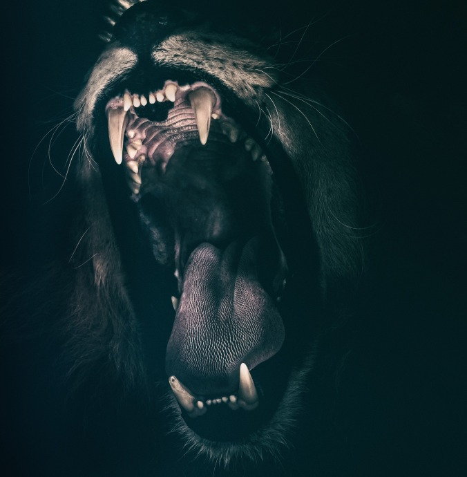 lion-2885618_1920